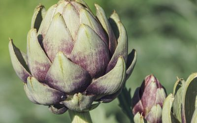 3 Amazing Recipes to Boost Your Spring Health – With Artichokes!